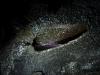 tunnels-de-lave-classique-001